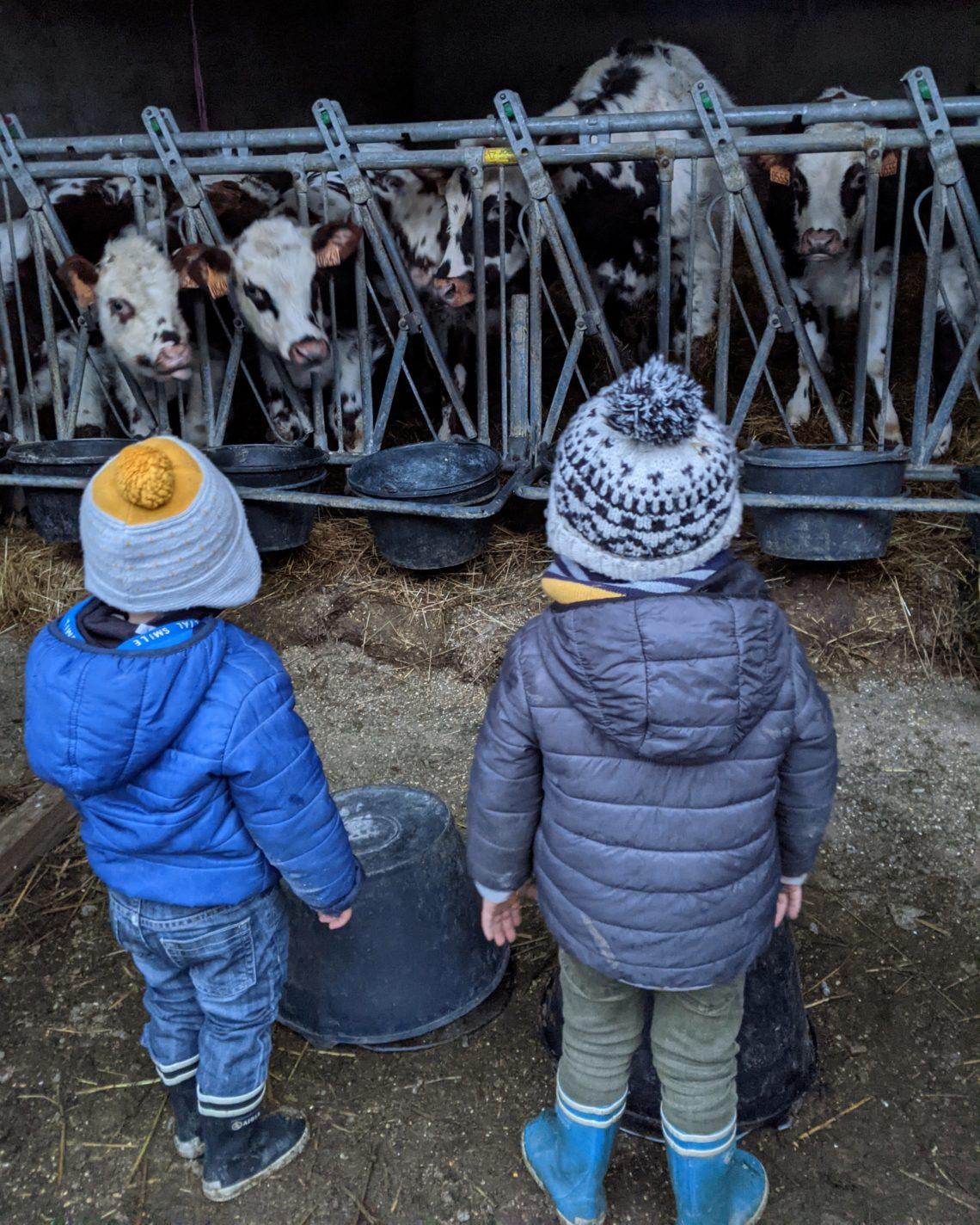Les enfants adorent les veaux!